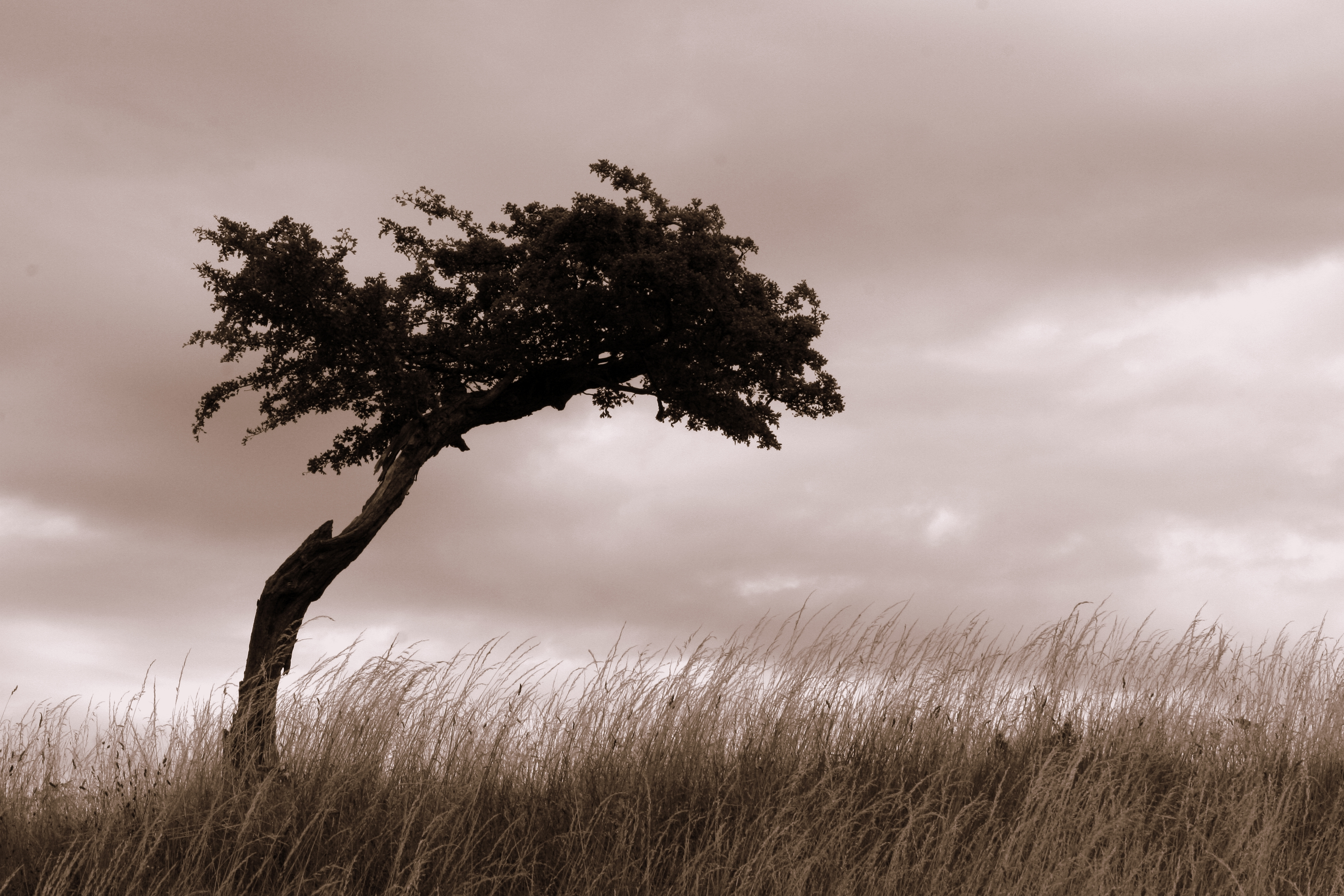 lonely tree social groups help reduce anxiety and depression psychotherapy counselling manchester