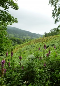 Ecotherapy Wilderness Therapy Workshop in Wales UK