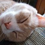 insomnia and sleep disorders | sleep manchester